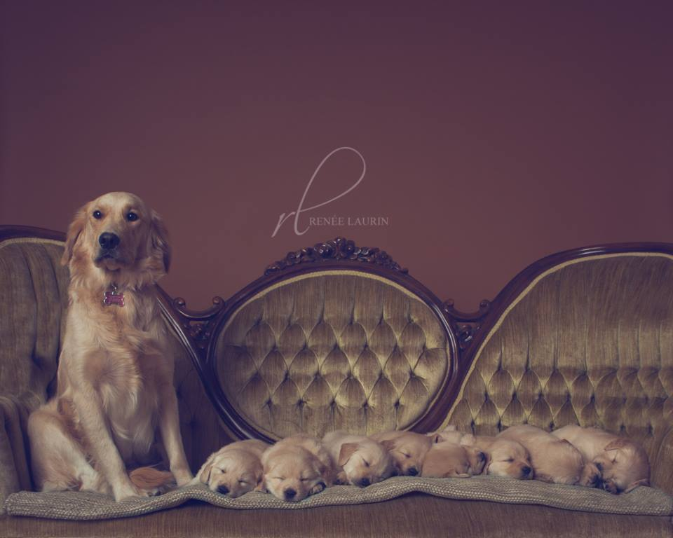 Bella&pups